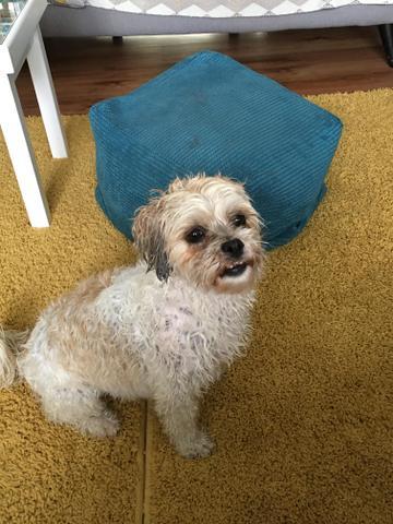 Lola after her bath
