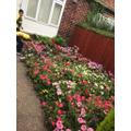 Hijran's Beautiful Garden