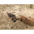 We just love digging in the sand
