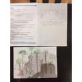 Alan - Maths and Rainforest Work