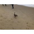 Rodney loved the sand