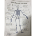 Hashim's been learning about the body.