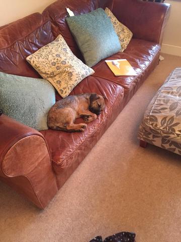 Asleep on the sofa.