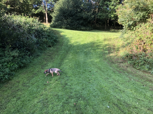 My first run in the park