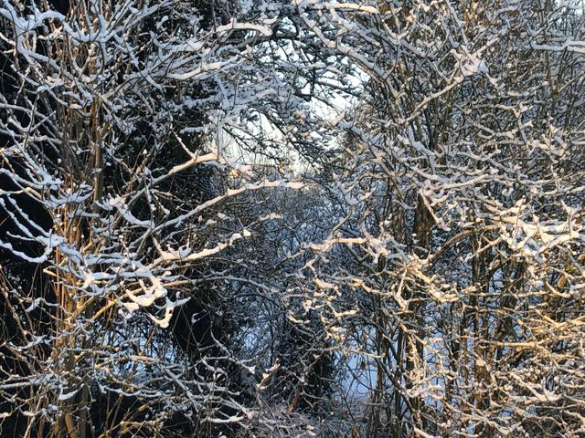 A snowy tree.