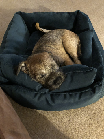 Asleep in my new bed.