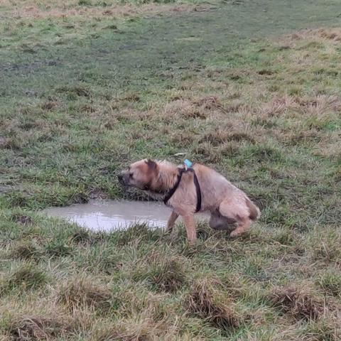 He's got wet - he's shaking himself to get dry