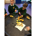 We looked closer at the structure of our fruit