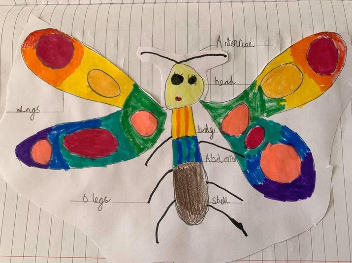 Jenny's Colourful Insect