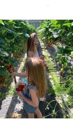 Mia picking delicious strawberries with Ola.