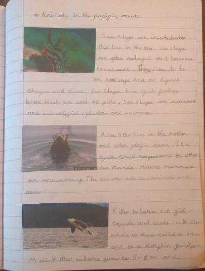 Layla's detailed report on ocean animals.