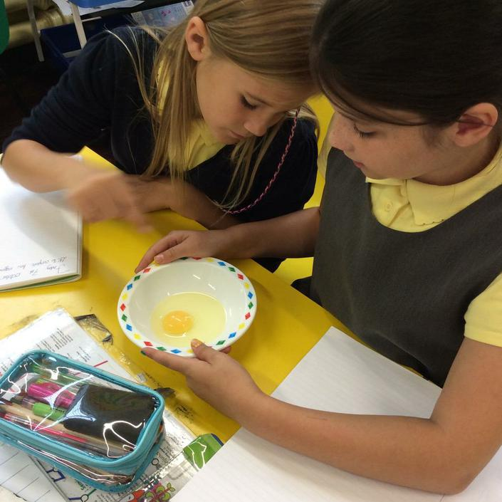 Examining an egg in our science lesson