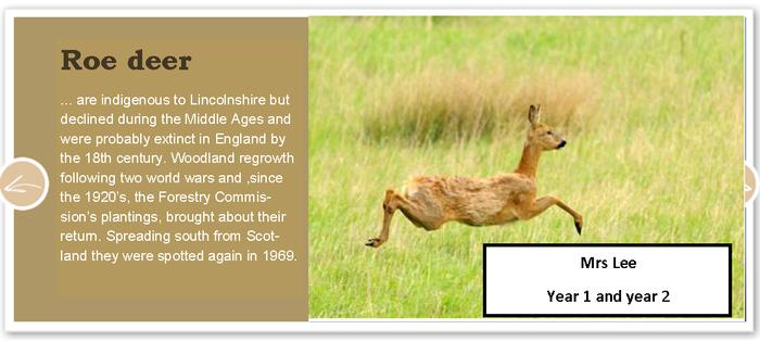 Roe Deer Class