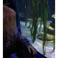 Can you spot Brooke's cuttlefish?
