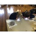 STEM Week - Forensic Science