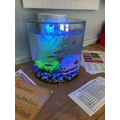 Our fish settled into their new home. Meet Danny, Daniella, Dante and Danise; the danios.