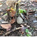 Building our own mini Stone Age shelters