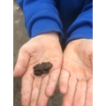 We found a toad in F2! We looked after it down the garden and made it it's own habitat!