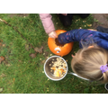 We scooped out the seeds from the pumpkin and saved them to make our own pumpkin patch!