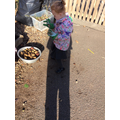 Bethany inspects the potato pile