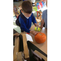 Look at our hammering of the golf tees in the pumpkins! Great concentration!