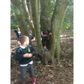 Our woods are great for climbing!