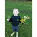 Collecting wonderful leaves.