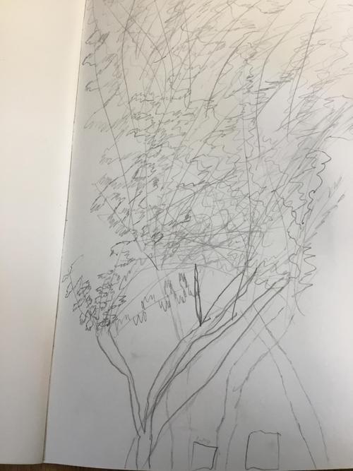 Harrison's Willow Tree