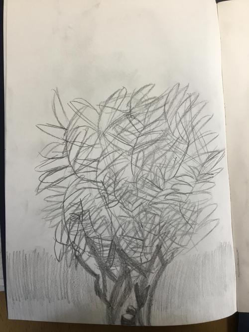Amelia's Willow Tree