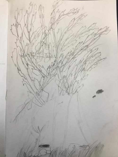 Eliot's Willow Tree