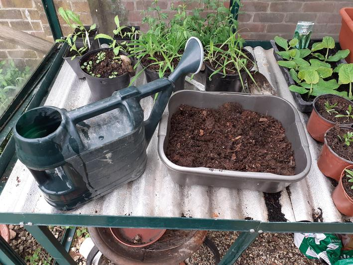 Add some water to the compost before you start planting.