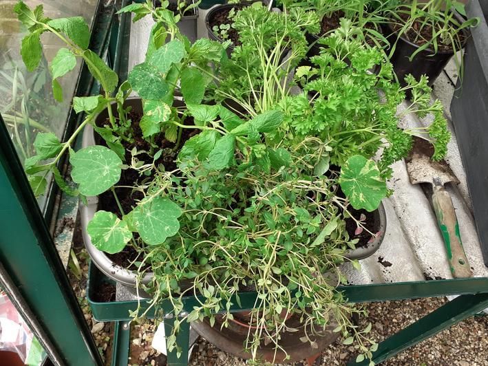 I added some nasturtiums that I have grown.