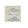 A sketch drawn by Mary Anning