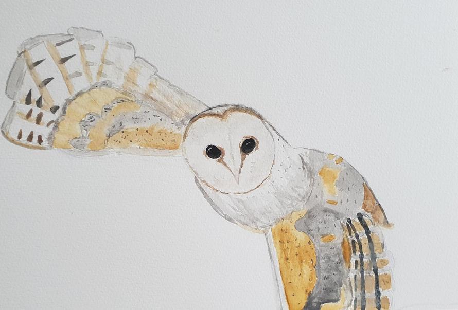 'Barn Owl' by Joy