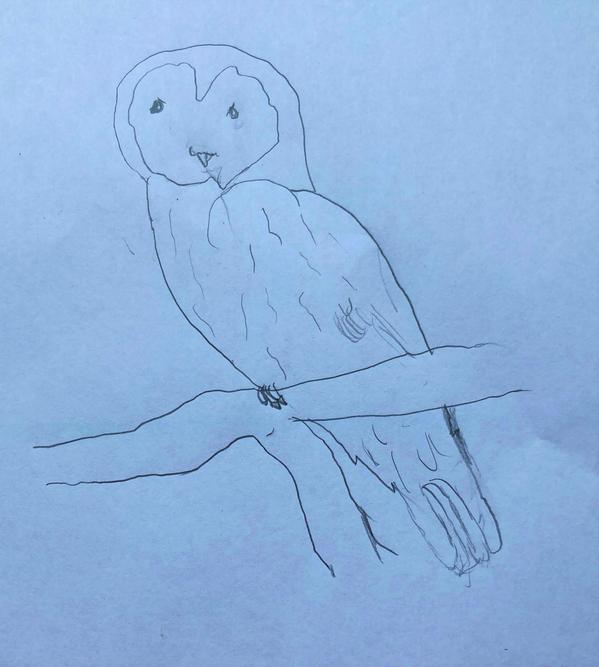 'Owl' by Connie
