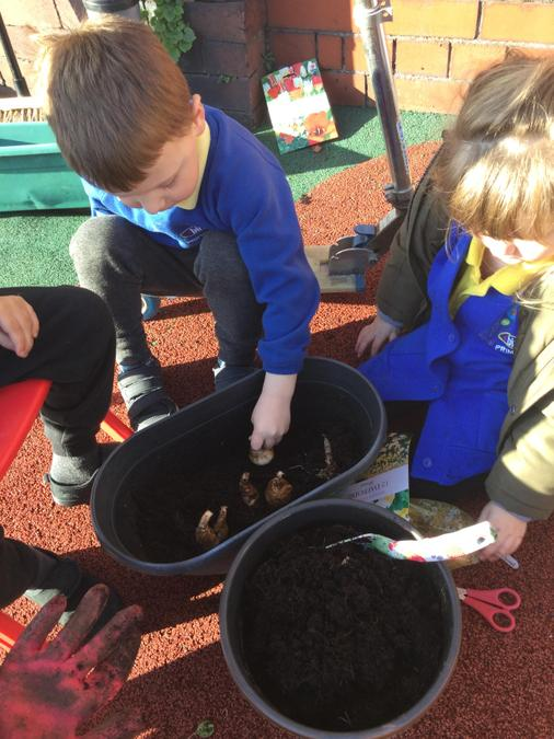 We love planting seeds and bulbs in the garden.