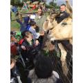 Mini Meadows Farm Visit