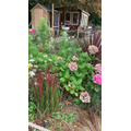 Working in the garden at Seniors - 24th August 2020