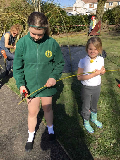 Using tools to cut the willow