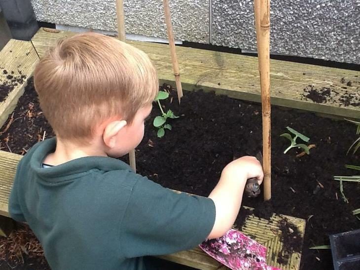 planting cucumbers and beans