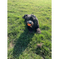 Mrs Cairns - Ted enjoying his daily exercise and play with his ball!.jpg