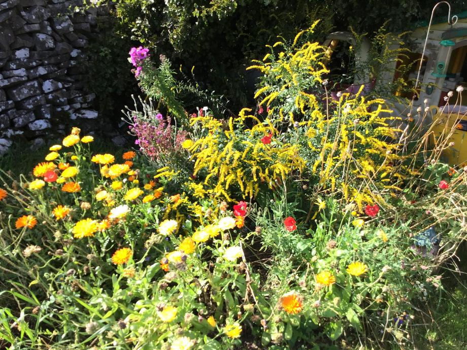 Wildflowers to attract Pollinators such as Bees