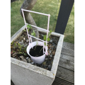 Look my plant is growing