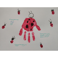 Ladybird facts