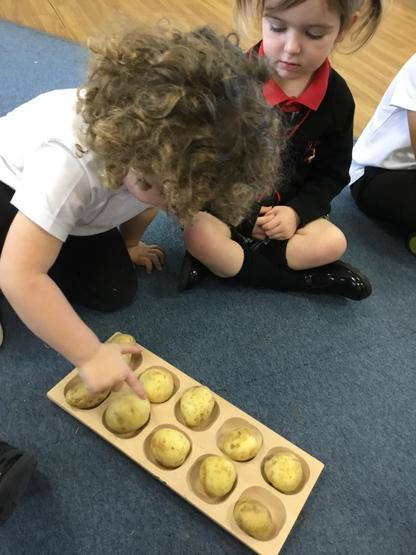 Potato counting