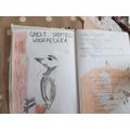 Emily C's journal