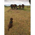 Checking out the wild ponies on the Quantox