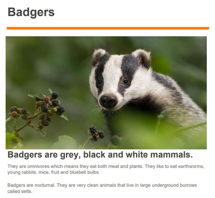 Chloe's fabulous report on badgers!