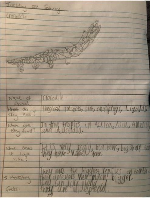 Zach's interesting report on crocodiles!