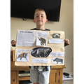 Oscar's incredible poster about Stone Age animals!